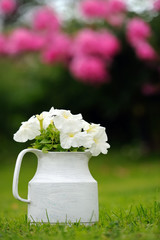 White Petunia Flowers in Pot Outdoors