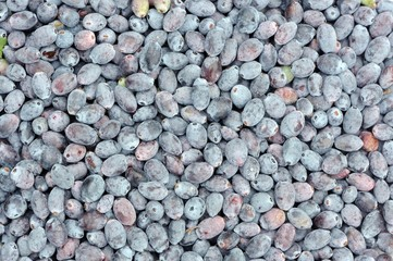 Blue Honeyberries Close-Up