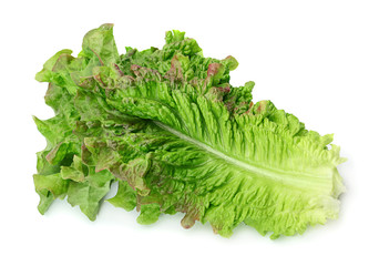 Curly lettuce salad
