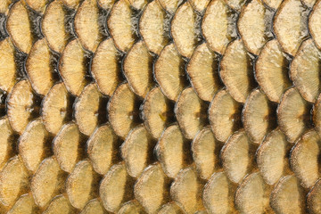 Natural background from fish scales (The Common Carp ).