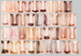 Great Variety of Women's Noses. Body Parts