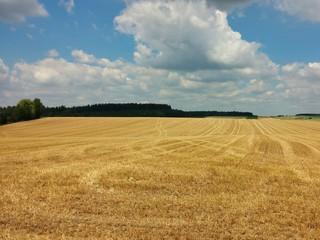 Getreidefeld Ernte