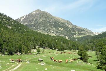 Paisaje de la Cerdanya, Pirineo Catalan