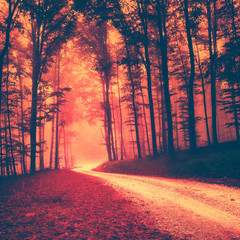 Creepy red vintage forest
