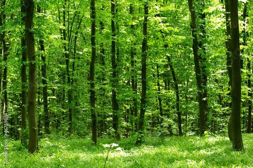 Plexiglas Bossen green forest