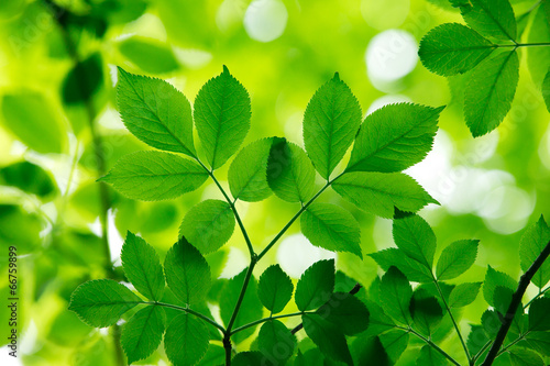Aluminium Planten green leaves
