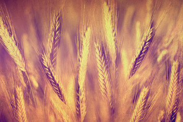 Grunge grain field background