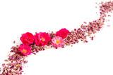 Rosenblüten und Blütenblätter