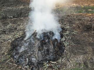 畑の野焼き