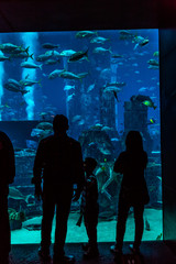 Huge aquarium in a hotel Atlantis in Dubai on the Palm islands