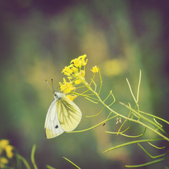 Butterfly on wildflowers