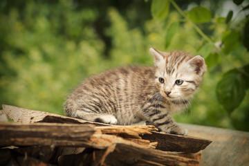 Little kitten on the prowl