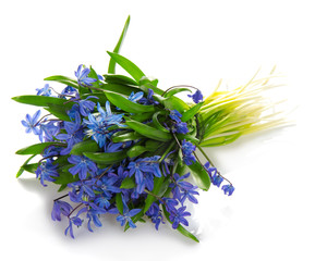 The bouquet of spring blue flowers