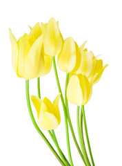 Spring bouquet of yellow tulips