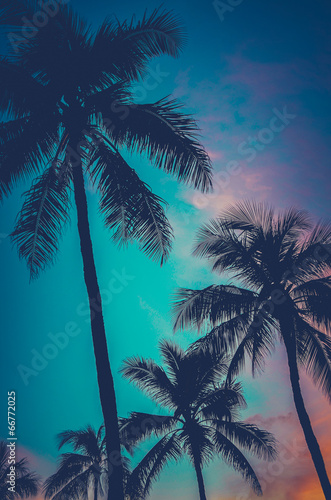 Aluminium Palm boom Retro Sunset Hawaii Palm Trees