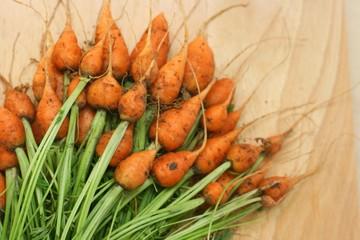 Fresh organic carrot parisier markt (Daucus carota)