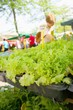 Lettuce and other seedlings on sale on farmers market