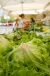 Fresh green lettuce and vegetables on farmers market