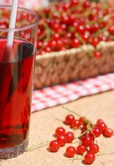 Fresh redcurrant or red currant (Ribes rubrum) drink