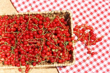 Fresh redcurrant or red currant (Ribes rubrum)