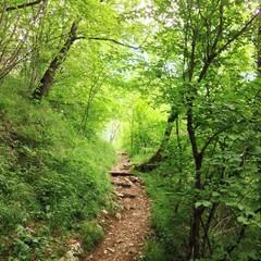 Weg durch Wald in Italien