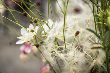 Blumen / Blumenstrauß / Gartenblumen
