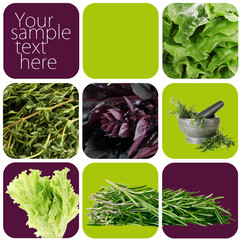 Collage of healthy herbs