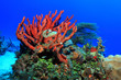 Colorful tropical coral reef in the caribbean sea - 66780036