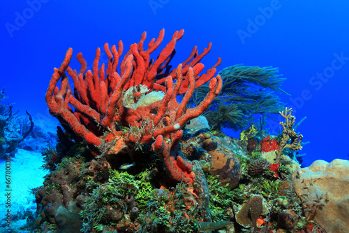 Fotobehang Koraalriffen Colorful tropical coral reef in the caribbean sea