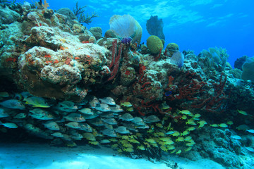 Tropical coral reef and fish in the caribbean sea