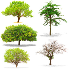Five trees isolated on white background