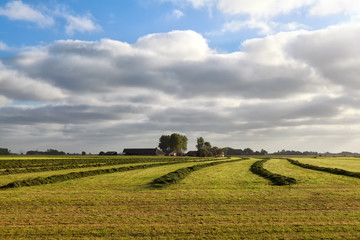 green fresh hay on Dutch farmland
