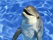 Portrait d'un dauphin commun