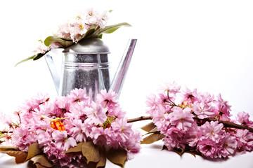 Kanne mit Kirschblueten