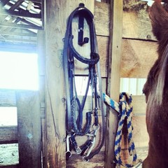 Hanging bridle