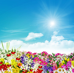 flowers on a background of blue sky with clouds