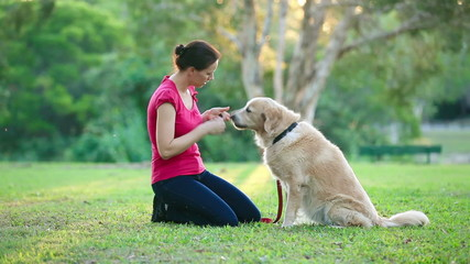 Dog and his female owner in the park doing shake
