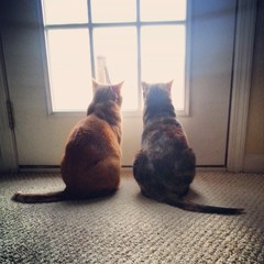 Cats looking out window