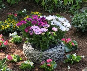 Dekorative Bepflanzung eines Grabes