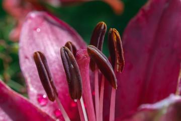 Under a pink gerbera