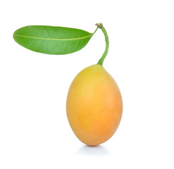 sweet Marian plum thai fruit isolated on white background (Mayon