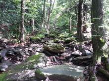 Fototapete - Forest in the Adirondacks, New York