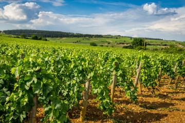 colline de Bourgogne