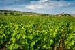 Village viticole de Bourgogne
