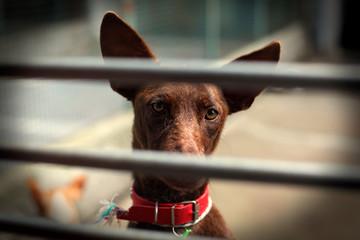 La tristezza di un cane in gabbia