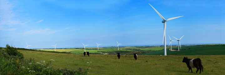 Panoramic view of a wind farm and cattle