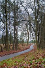 Rutschiger Radweg im Herbst, Herbstwetter