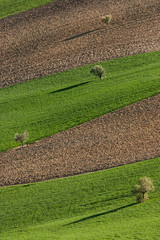 Paesaggio agreste marchigiano
