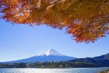 Fototapety 富士山と紅葉