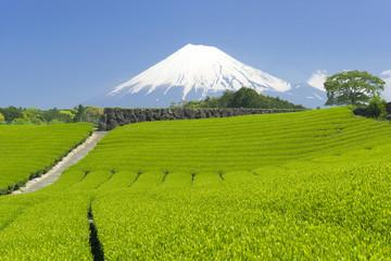 茶畑と富士山-1417